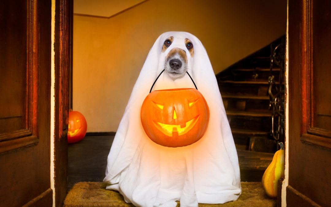 U.S. Census Bureau Shares Fun Halloween Facts